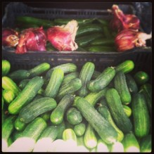 thao cucumbers